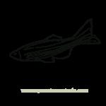 Dibujo de pez para colorear