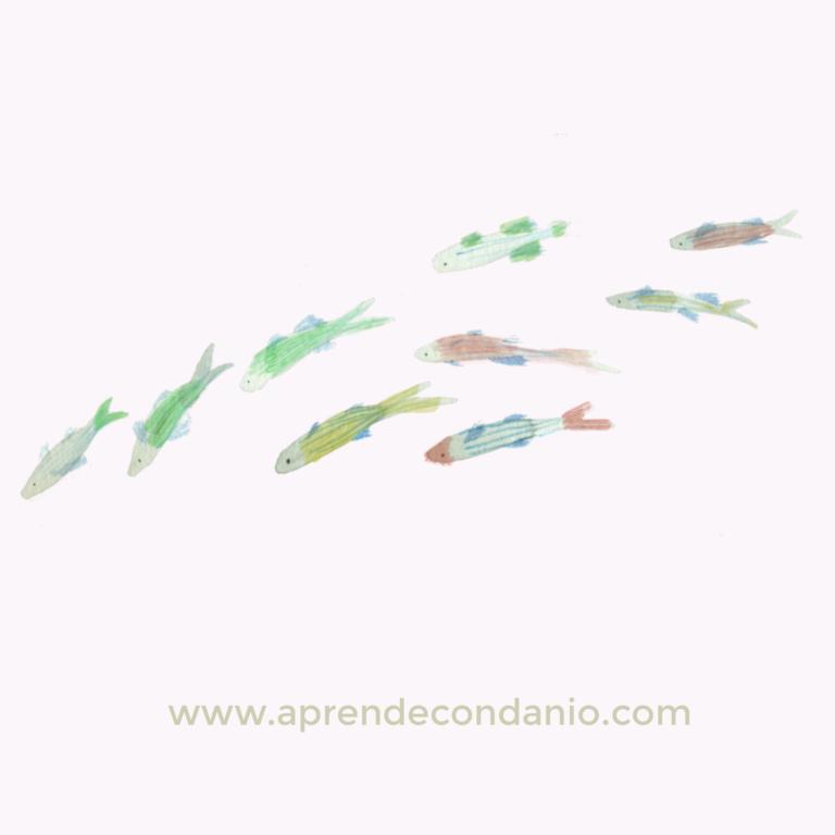 dibujo de pez para pintar