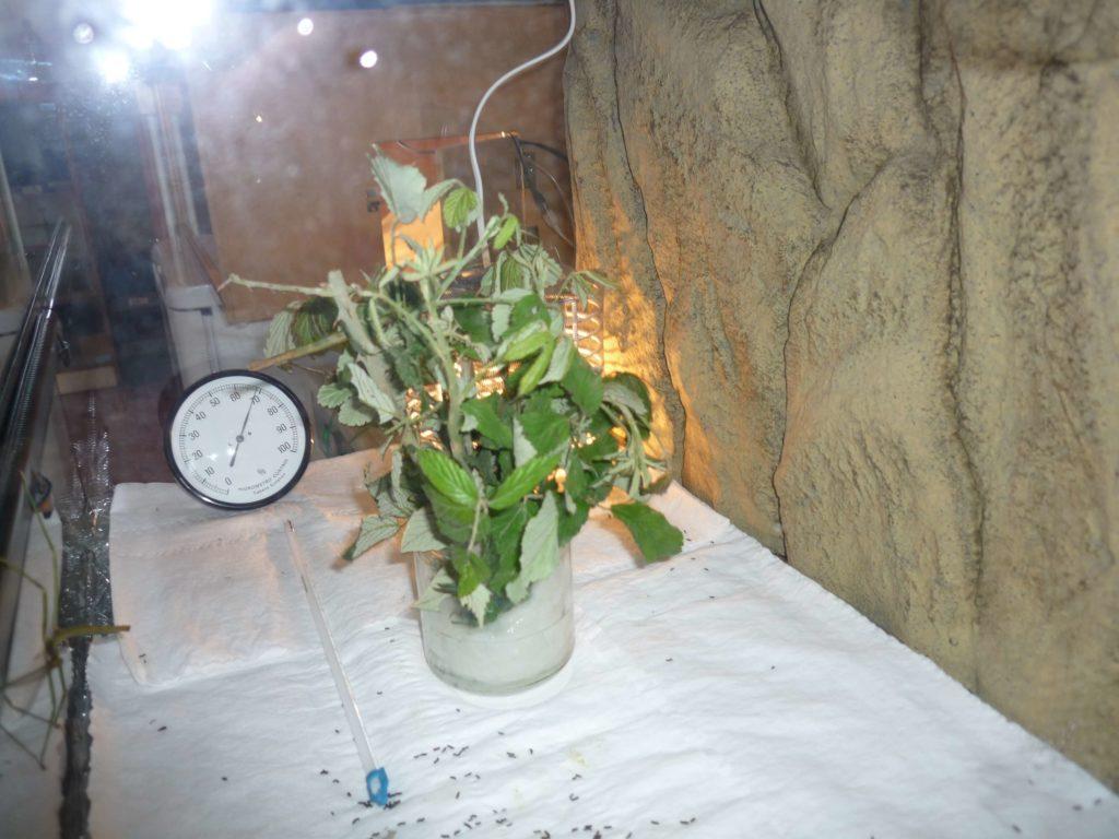 Proyectos steam. qué comen los insectos palo